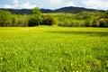 Field of wildflowers in bloom in the Smokies. Royalty Free Stock Photo