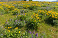 Field Of Wildflowers At Columb...