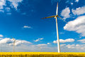 Field wind mill turbines farm landscape rape Royalty Free Stock Photo