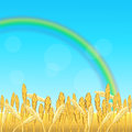 Field with yellow wheat and rainbow Royalty Free Stock Photo