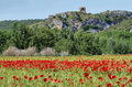 Fields of cereals and poppies with ruins ancient castle at background near alos de balaguer la noguera lleida spain Stock Images