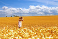 Fields of gold Royalty Free Stock Image