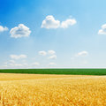 Fields with golden harvest and blue sky Royalty Free Stock Photo