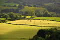 Fields green in england uk Royalty Free Stock Images