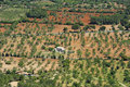 Fields in Majorca Stock Images