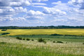 Fields and meadows russia in the voronezh region Royalty Free Stock Images