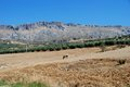 Fields and mountains, Almogia, Andalusia, Spain. Royalty Free Stock Photo