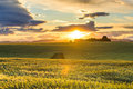 Fields at sunset in Provence Royalty Free Stock Photo