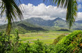 Fields of Taro, Hanalei Valley, Kauai, Hawaii Royalty Free Stock Image