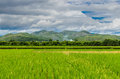 Fields in the valley beautiful rice field thailand Stock Image
