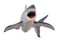 Fierce great white shark isloated on white a with mouth open and ready to strike isolated a background Royalty Free Stock Photo