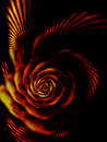 Fiery rose, the flower of passion Royalty Free Stock Images