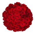 Fifty one roses red isolated on white Stock Photography