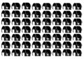 Elephants in black on a white background