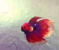 Fight fish in water d graphic illustration render computer mosaic flat surface style wallpaper with betta siamese red white and Royalty Free Stock Images
