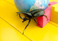 Fighting beetle rhinoceros beetle on the yellow table close up of selective focus Royalty Free Stock Photos