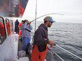 Fighting the Bluefish Royalty Free Stock Photo