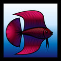 Fighting fish Royalty Free Stock Photos