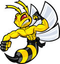 Fighting Hornet Royalty Free Stock Photos