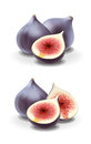 Figs illustration detailed vector for best prints and other uses Stock Images