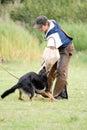 Figurant and German shepherd Stock Photography