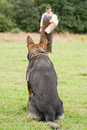 Figurant and German shepherd at work Stock Photos