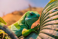 Fiji banded iguana on a leaf Royalty Free Stock Photos