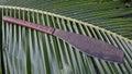 Fijian machete with wooden handle