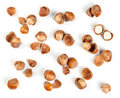 Filbert nut Royalty Free Stock Photo