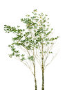 File Isolated Of Tree Plant Wi...