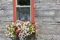 Filled flower box against weathered wooden siding Stock Image
