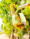 Filling glass white wine bottle vineyard grapes background Royalty Free Stock Photos