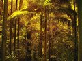 Filtered light through palm leaves in sub tropical rain forest. Royalty Free Stock Photo