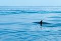 Fin of a shark in the high sea Royalty Free Stock Photos