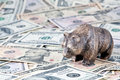 Finance, stock exchange. The bear costs on money Stock Images