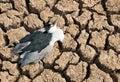 stock image of  Bird carcass