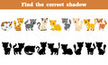 Find the correct shadow cats game for children Stock Photography