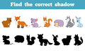 Find the correct shadow forest animals education game for children Royalty Free Stock Photography