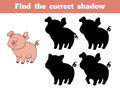 Find the correct shadow pig game for children Royalty Free Stock Photos