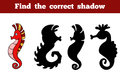 Find the correct shadow (sea horse) Royalty Free Stock Photo