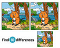 Find differences, Quokka Royalty Free Stock Photo