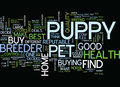 Find Healthy Puppy Of Reputable Breeder Text Background Word Cloud Concept Royalty Free Stock Photo