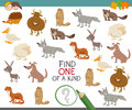 Find one of a kind with animals Royalty Free Stock Photo