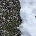 Fine gravel gravel overgrown with grass and covered with snow. Natural abstraction. Royalty Free Stock Photo