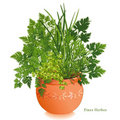 Fines Herbes in Clay Planter Royalty Free Stock Photo