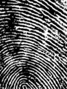 FingerPrint Crop 1 Stock Images