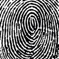 Fingerprint16_crop_DT.jpg Royalty Free Stock Photo