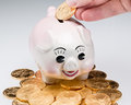 Fingers placing single gold coin slot piggy bank stack coins around pig Stock Images