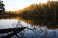 Finland autumn colours by a lake calm in Royalty Free Stock Photo