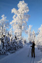 Finland: Cross country skiing Royalty Free Stock Photography